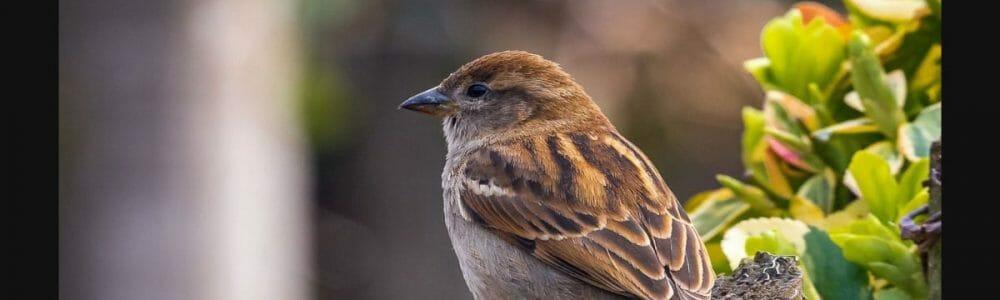 sparrow 4